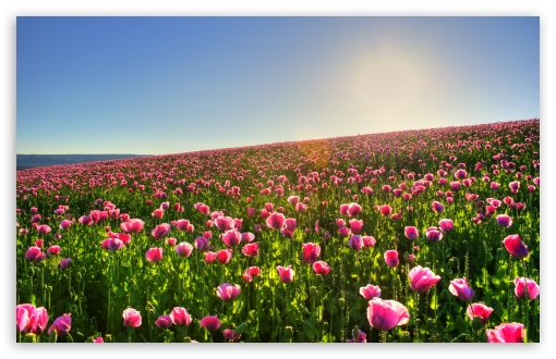 Beautiful Flower Field ❤ 4K UHD Wallpaper for Wide 16:10 5:3 Widescreen WHXGA WQXGA WUXGA WXGA WGA ; 4K UHD 16:9 Ultra High Definition 2160p 1440p 1080p 900p 720p ; Standard 4:3 5:4 3:2 Fullscreen UXGA XGA SVGA QSXGA SXGA DVGA HVGA HQVGA ( Apple PowerBook G4 iPhone 4 3G 3GS iPod Touch ) ; Tablet 1:1 ; iPad 1/2/Mini ; Mobile 4:3 5:3 3:2 16:9 5:4 - UXGA XGA SVGA WGA DVGA HVGA HQVGA ( Apple PowerBook G4 iPhone 4 3G 3GS iPod Touch ) 2160p 1440p 1080p 900p 720p QSXGA SXGA ; Dual 16:10 5:3 16:9 5:4 WHXGA WQXGA WUXGA WXGA WGA 2160p 1440p 1080p 900p 720p QSXGA SXGA ;