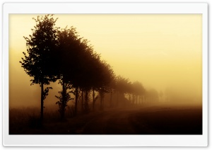 Beautiful Foggy Day HD Wide Wallpaper for Widescreen