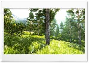 Beautiful Forest HD Wide Wallpaper for Widescreen