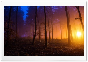 Beautiful Forest Ultra HD Wallpaper for 4K UHD Widescreen desktop, tablet & smartphone