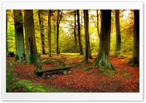 Beautiful Forest, Autumn HD Wide Wallpaper for Widescreen