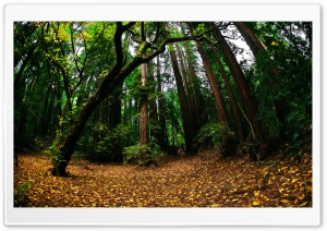 Beautiful Forest, Fisheye Lens HD Wide Wallpaper for Widescreen
