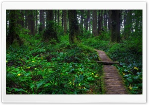 Beautiful Forest Path HD Wide Wallpaper for 4K UHD Widescreen desktop & smartphone