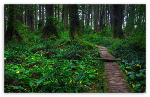 Beautiful Forest Path HD wallpaper for Wide 16:10 5:3 Widescreen WHXGA WQXGA WUXGA WXGA WGA ; HD 16:9 High Definition WQHD QWXGA 1080p 900p 720p QHD nHD ; Standard 4:3 5:4 3:2 Fullscreen UXGA XGA SVGA QSXGA SXGA DVGA HVGA HQVGA devices ( Apple PowerBook G4 iPhone 4 3G 3GS iPod Touch ) ; Tablet 1:1 ; iPad 1/2/Mini ; Mobile 4:3 5:3 3:2 16:9 5:4 - UXGA XGA SVGA WGA DVGA HVGA HQVGA devices ( Apple PowerBook G4 iPhone 4 3G 3GS iPod Touch ) WQHD QWXGA 1080p 900p 720p QHD nHD QSXGA SXGA ; Dual 5:4 QSXGA SXGA ;