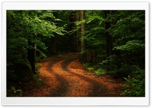 Beautiful Forest Path HD Wide Wallpaper for Widescreen