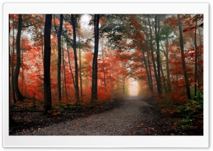 Beautiful Forest Path Autumn HD Wide Wallpaper for Widescreen