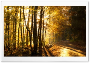 Beautiful Forest Road, Autumn HD Wide Wallpaper for 4K UHD Widescreen desktop & smartphone