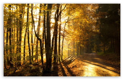 Beautiful Forest Road, Autumn HD wallpaper for Wide 16:10 5:3 Widescreen WHXGA WQXGA WUXGA WXGA WGA ; HD 16:9 High Definition WQHD QWXGA 1080p 900p 720p QHD nHD ; Standard 4:3 5:4 3:2 Fullscreen UXGA XGA SVGA QSXGA SXGA DVGA HVGA HQVGA devices ( Apple PowerBook G4 iPhone 4 3G 3GS iPod Touch ) ; Tablet 1:1 ; iPad 1/2/Mini ; Mobile 4:3 5:3 3:2 16:9 5:4 - UXGA XGA SVGA WGA DVGA HVGA HQVGA devices ( Apple PowerBook G4 iPhone 4 3G 3GS iPod Touch ) WQHD QWXGA 1080p 900p 720p QHD nHD QSXGA SXGA ; Dual 5:4 QSXGA SXGA ;