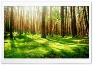Beautiful Forest Scenery HD Wide Wallpaper for Widescreen