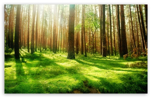 Beautiful Forest Scenery HD wallpaper for Standard 4:3 5:4 Fullscreen UXGA XGA SVGA QSXGA SXGA ; Wide 16:10 5:3 Widescreen WHXGA WQXGA WUXGA WXGA WGA ; HD 16:9 High Definition WQHD QWXGA 1080p 900p 720p QHD nHD ; Other 3:2 DVGA HVGA HQVGA devices ( Apple PowerBook G4 iPhone 4 3G 3GS iPod Touch ) ; Mobile VGA WVGA iPhone iPad PSP Phone - VGA QVGA Smartphone ( PocketPC GPS iPod Zune BlackBerry HTC Samsung LG Nokia Eten Asus ) WVGA WQVGA Smartphone ( HTC Samsung Sony Ericsson LG Vertu MIO ) HVGA Smartphone ( Apple iPhone iPod BlackBerry HTC Samsung Nokia ) Sony PSP Zune HD Zen ; Tablet 2 Android 3 DVGA HVGA HQVGA devices ( Apple PowerBook G4 iPhone 4 3G 3GS iPod Touch ) ; Dual 4:3 5:4 16:10 5:3 16:9 UXGA XGA SVGA QSXGA SXGA WHXGA WQXGA WUXGA WXGA WGA WQHD QWXGA 1080p 900p 720p QHD nHD ;