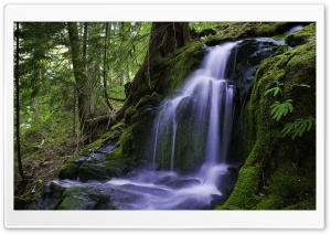 Beautiful Forest Waterfall HD Wide Wallpaper for Widescreen