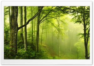 Beautiful Green Forest HD Wide Wallpaper for Widescreen