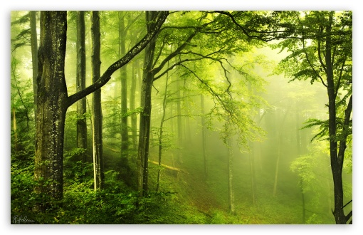 Beautiful Green Forest HD wallpaper for Standard 4:3 5:4 Fullscreen UXGA XGA SVGA QSXGA SXGA ; Wide 16:10 5:3 Widescreen WHXGA WQXGA WUXGA WXGA WGA ; HD 16:9 High Definition WQHD QWXGA 1080p 900p 720p QHD nHD ; Other 3:2 DVGA HVGA HQVGA devices ( Apple PowerBook G4 iPhone 4 3G 3GS iPod Touch ) ; Mobile VGA WVGA iPhone iPad PSP Phone - VGA QVGA Smartphone ( PocketPC GPS iPod Zune BlackBerry HTC Samsung LG Nokia Eten Asus ) WVGA WQVGA Smartphone ( HTC Samsung Sony Ericsson LG Vertu MIO ) HVGA Smartphone ( Apple iPhone iPod BlackBerry HTC Samsung Nokia ) Sony PSP Zune HD Zen ; Tablet 2 Android ;