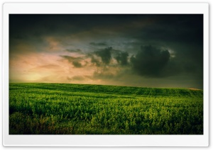 Beautiful Green Grass Field HD Wide Wallpaper for Widescreen