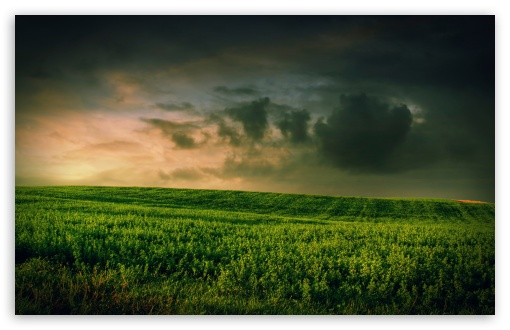 Beautiful Green Grass Field HD wallpaper for Standard 4:3 5:4 Fullscreen UXGA XGA SVGA QSXGA SXGA ; Wide 16:10 5:3 Widescreen WHXGA WQXGA WUXGA WXGA WGA ; HD 16:9 High Definition WQHD QWXGA 1080p 900p 720p QHD nHD ; Other 3:2 DVGA HVGA HQVGA devices ( Apple PowerBook G4 iPhone 4 3G 3GS iPod Touch ) ; Mobile VGA WVGA iPhone iPad PSP Phone - VGA QVGA Smartphone ( PocketPC GPS iPod Zune BlackBerry HTC Samsung LG Nokia Eten Asus ) WVGA WQVGA Smartphone ( HTC Samsung Sony Ericsson LG Vertu MIO ) HVGA Smartphone ( Apple iPhone iPod BlackBerry HTC Samsung Nokia ) Sony PSP Zune HD Zen ; Tablet 2 Android ; Dual 4:3 5:4 16:10 5:3 16:9 UXGA XGA SVGA QSXGA SXGA WHXGA WQXGA WUXGA WXGA WGA WQHD QWXGA 1080p 900p 720p QHD nHD ;