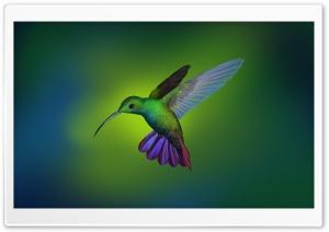 Beautiful Hummingbird Art