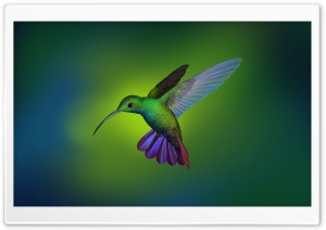 Beautiful Hummingbird Art HD Wide Wallpaper for 4K UHD Widescreen desktop & smartphone