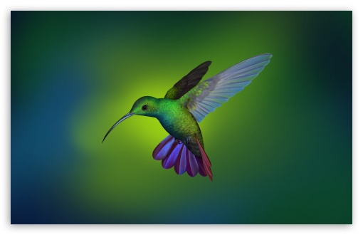 Beautiful Hummingbird Art UltraHD Wallpaper for Wide 16:10 5:3 Widescreen WHXGA WQXGA WUXGA WXGA WGA ; UltraWide 21:9 24:10 ; 8K UHD TV 16:9 Ultra High Definition 2160p 1440p 1080p 900p 720p ; UHD 16:9 2160p 1440p 1080p 900p 720p ; Standard 4:3 5:4 3:2 Fullscreen UXGA XGA SVGA QSXGA SXGA DVGA HVGA HQVGA ( Apple PowerBook G4 iPhone 4 3G 3GS iPod Touch ) ; Tablet 1:1 ; iPad 1/2/Mini ; Mobile 4:3 5:3 3:2 16:9 5:4 - UXGA XGA SVGA WGA DVGA HVGA HQVGA ( Apple PowerBook G4 iPhone 4 3G 3GS iPod Touch ) 2160p 1440p 1080p 900p 720p QSXGA SXGA ; Dual 4:3 5:4 UXGA XGA SVGA QSXGA SXGA ;