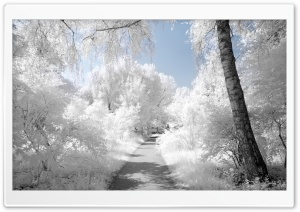 Beautiful Infrared Landscape HD Wide Wallpaper for Widescreen