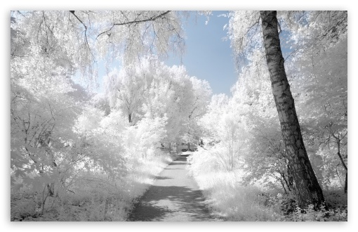 Beautiful Infrared Landscape HD wallpaper for Standard 4:3 5:4 Fullscreen UXGA XGA SVGA QSXGA SXGA ; Wide 16:10 5:3 Widescreen WHXGA WQXGA WUXGA WXGA WGA ; HD 16:9 High Definition WQHD QWXGA 1080p 900p 720p QHD nHD ; Other 3:2 DVGA HVGA HQVGA devices ( Apple PowerBook G4 iPhone 4 3G 3GS iPod Touch ) ; Mobile VGA WVGA iPhone iPad PSP Phone - VGA QVGA Smartphone ( PocketPC GPS iPod Zune BlackBerry HTC Samsung LG Nokia Eten Asus ) WVGA WQVGA Smartphone ( HTC Samsung Sony Ericsson LG Vertu MIO ) HVGA Smartphone ( Apple iPhone iPod BlackBerry HTC Samsung Nokia ) Sony PSP Zune HD Zen ; Tablet 2 Android ; Dual 4:3 5:4 16:10 5:3 16:9 UXGA XGA SVGA QSXGA SXGA WHXGA WQXGA WUXGA WXGA WGA WQHD QWXGA 1080p 900p 720p QHD nHD ;
