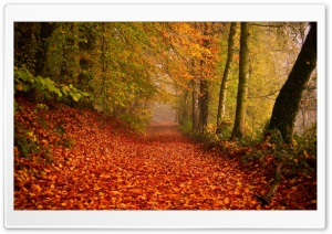 Beautiful Leafy Alley, Autumn HD Wide Wallpaper for Widescreen