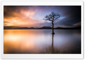 Beautiful Lone Tree, Lake, Nature Ultra HD Wallpaper for 4K UHD Widescreen desktop, tablet & smartphone
