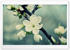 Beautiful Macro HD Wide Wallpaper for Widescreen