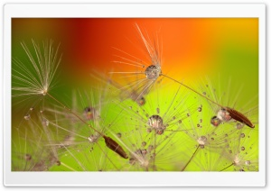 Beautiful Macro, Dandelion Seeds HD Wide Wallpaper for Widescreen