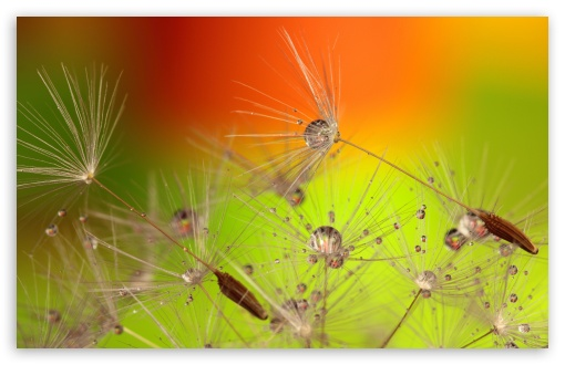 Beautiful Macro, Dandelion Seeds ❤ 4K UHD Wallpaper for Wide 16:10 5:3 Widescreen WHXGA WQXGA WUXGA WXGA WGA ; 4K UHD 16:9 Ultra High Definition 2160p 1440p 1080p 900p 720p ; UHD 16:9 2160p 1440p 1080p 900p 720p ; Standard 5:4 3:2 Fullscreen QSXGA SXGA DVGA HVGA HQVGA ( Apple PowerBook G4 iPhone 4 3G 3GS iPod Touch ) ; Smartphone 5:3 WGA ; Tablet 1:1 ; iPad 1/2/Mini ; Mobile 4:3 5:3 3:2 16:9 5:4 - UXGA XGA SVGA WGA DVGA HVGA HQVGA ( Apple PowerBook G4 iPhone 4 3G 3GS iPod Touch ) 2160p 1440p 1080p 900p 720p QSXGA SXGA ; Dual 4:3 5:4 UXGA XGA SVGA QSXGA SXGA ;