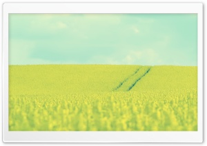 Beautiful Mustard Field HD Wide Wallpaper for Widescreen