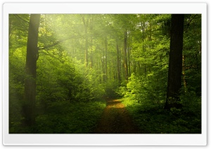 Beautiful Nature Image, Green Forest HD Wide Wallpaper for Widescreen