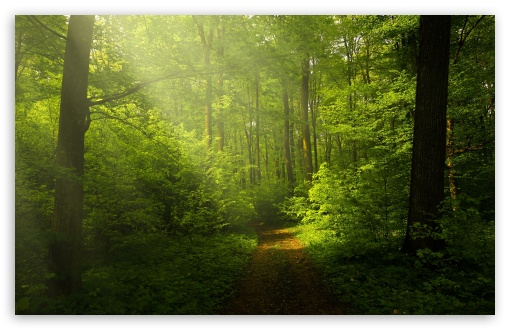 Beautiful Nature Image, Green Forest 4K HD Desktop