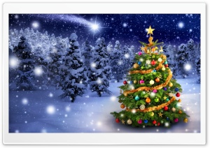 Beautiful Outdoor Christmas Tree HD Wide Wallpaper for Widescreen