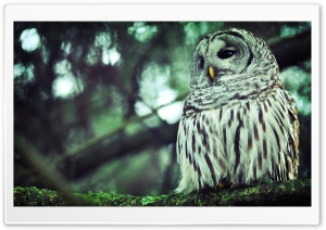 Beautiful Owl HD Wide Wallpaper for Widescreen