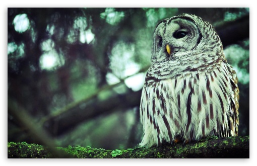 Beautiful Owl HD wallpaper for Standard 4:3 5:4 Fullscreen UXGA XGA SVGA QSXGA SXGA ; Wide 16:10 5:3 Widescreen WHXGA WQXGA WUXGA WXGA WGA ; HD 16:9 High Definition WQHD QWXGA 1080p 900p 720p QHD nHD ; Other 3:2 DVGA HVGA HQVGA devices ( Apple PowerBook G4 iPhone 4 3G 3GS iPod Touch ) ; Mobile VGA WVGA iPhone iPad PSP Phone - VGA QVGA Smartphone ( PocketPC GPS iPod Zune BlackBerry HTC Samsung LG Nokia Eten Asus ) WVGA WQVGA Smartphone ( HTC Samsung Sony Ericsson LG Vertu MIO ) HVGA Smartphone ( Apple iPhone iPod BlackBerry HTC Samsung Nokia ) Sony PSP Zune HD Zen ; Tablet 2 ;