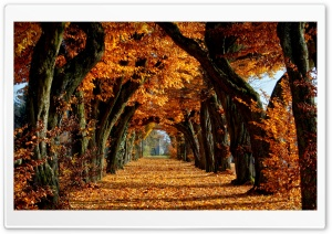 Beautiful Path HD Wide Wallpaper for Widescreen