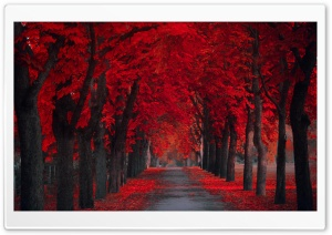 Beautiful Pathway HD Wide Wallpaper for Widescreen