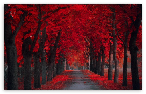 Full Screen Wallpaper Of Love : Beautiful Pathway 4K HD Desktop Wallpaper for 4K Ultra HD TV ? Tablet ? Smartphone ? Mobile Devices