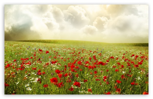 Beautiful Poppy Field HD wallpaper for Wide 16:10 5:3 Widescreen WHXGA WQXGA WUXGA WXGA WGA ; HD 16:9 High Definition WQHD QWXGA 1080p 900p 720p QHD nHD ; Standard 4:3 5:4 3:2 Fullscreen UXGA XGA SVGA QSXGA SXGA DVGA HVGA HQVGA devices ( Apple PowerBook G4 iPhone 4 3G 3GS iPod Touch ) ; Tablet 1:1 ; iPad 1/2/Mini ; Mobile 4:3 5:3 3:2 16:9 5:4 - UXGA XGA SVGA WGA DVGA HVGA HQVGA devices ( Apple PowerBook G4 iPhone 4 3G 3GS iPod Touch ) WQHD QWXGA 1080p 900p 720p QHD nHD QSXGA SXGA ; Dual 16:10 5:3 16:9 4:3 5:4 WHXGA WQXGA WUXGA WXGA WGA WQHD QWXGA 1080p 900p 720p QHD nHD UXGA XGA SVGA QSXGA SXGA ;