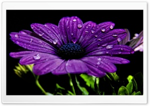 Beautiful Purple Flower HD Wide Wallpaper for Widescreen