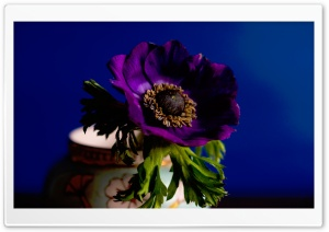 Beautiful Purple Flower in Vase
