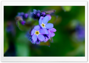 Beautiful Purple Flower, Macro HD Wide Wallpaper for Widescreen
