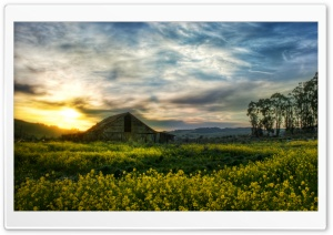 Beautiful Rape Field HD Wide Wallpaper for Widescreen