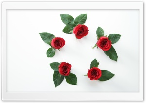 Beautiful Red Roses Flowers Circle HD Wide Wallpaper for Widescreen