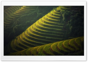Beautiful Rice Terraces Landscape HD Wide Wallpaper for Widescreen