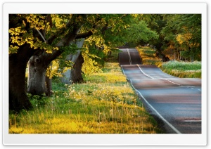 Beautiful Road HD Wide Wallpaper for 4K UHD Widescreen desktop & smartphone