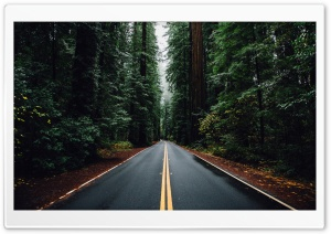 Beautiful Road HD Wide Wallpaper for Widescreen