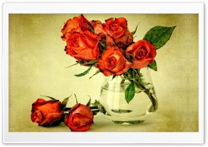 Beautiful Roses HD Wide Wallpaper for Widescreen
