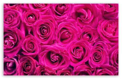 Beautiful Roses Flowers Background UltraHD Wallpaper for Wide 16:10 5:3 Widescreen WHXGA WQXGA WUXGA WXGA WGA ; UltraWide 21:9 24:10 ; 8K UHD TV 16:9 Ultra High Definition 2160p 1440p 1080p 900p 720p ; UHD 16:9 2160p 1440p 1080p 900p 720p ; Standard 4:3 5:4 3:2 Fullscreen UXGA XGA SVGA QSXGA SXGA DVGA HVGA HQVGA ( Apple PowerBook G4 iPhone 4 3G 3GS iPod Touch ) ; Smartphone 16:9 3:2 5:3 2160p 1440p 1080p 900p 720p DVGA HVGA HQVGA ( Apple PowerBook G4 iPhone 4 3G 3GS iPod Touch ) WGA ; Tablet 1:1 ; iPad 1/2/Mini ; Mobile 4:3 5:3 3:2 16:9 5:4 - UXGA XGA SVGA WGA DVGA HVGA HQVGA ( Apple PowerBook G4 iPhone 4 3G 3GS iPod Touch ) 2160p 1440p 1080p 900p 720p QSXGA SXGA ; Dual 16:10 5:3 16:9 4:3 5:4 3:2 WHXGA WQXGA WUXGA WXGA WGA 2160p 1440p 1080p 900p 720p UXGA XGA SVGA QSXGA SXGA DVGA HVGA HQVGA ( Apple PowerBook G4 iPhone 4 3G 3GS iPod Touch ) ;