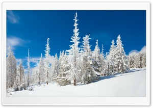 Beautiful Snowy Forest HD Wide Wallpaper for 4K UHD Widescreen desktop & smartphone